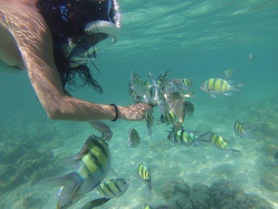 Fiji Palms Hotel Phuket: Однодневный трип за 400 батт на Banan Beach