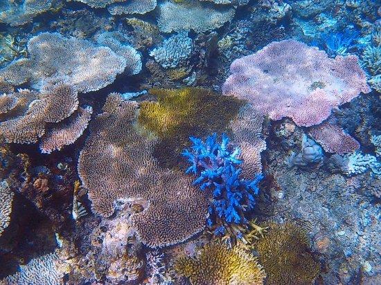 Sablayan, الفلبين: corals