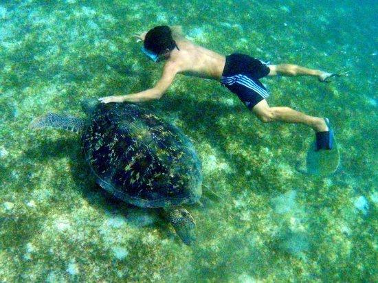 Sablayan, الفلبين: green sea turtle