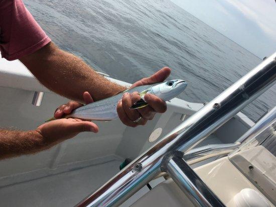 Mahi mahi picture of gulf angler fishing charters for Gulf angler fishing charters