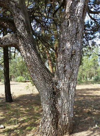 Show Low, AZ: Show City Park in the Woods
