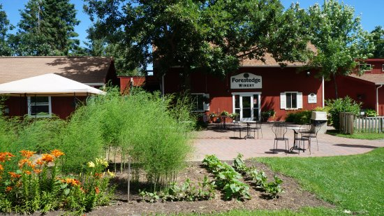 LaPorte, MN: Forestedge Winery / outdoor patio area