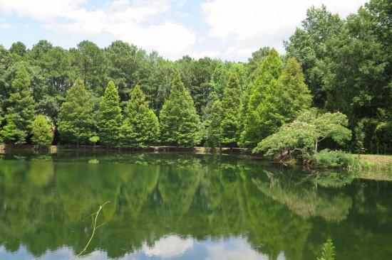 Pond Picture Of Coastal Georgia Botanical Gardens Savannah Tripadvisor