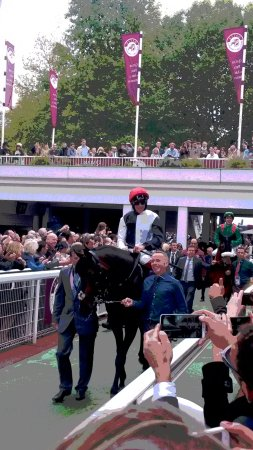 Longchamp Racecourse: The horse coming from the Paddock Area