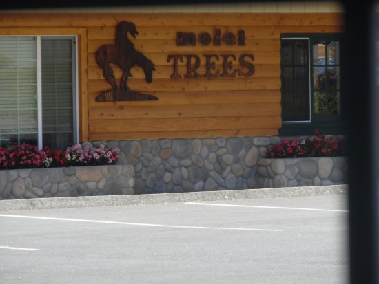 Motel Trees: Hotel grounds