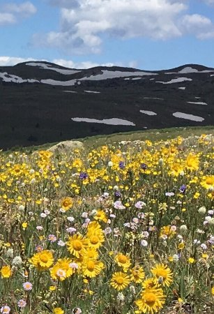 Twin Lakes, Colorado: Western Side of the Continental Divide in Glorious summer bloom July 2016