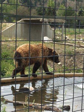 Kamloops Wildlife Park: photo0.jpg