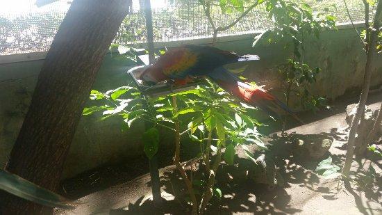 Parque Agua Azul: 20160401_123025_large.jpg