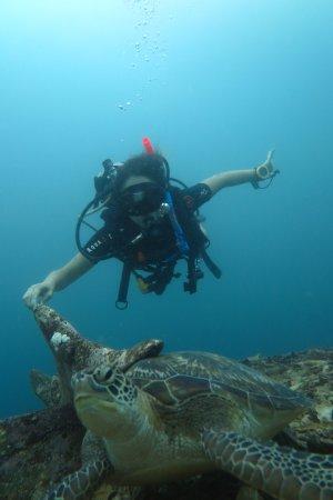 Blue Marlin Dive Gili Trawangan: Buceo con tortugas