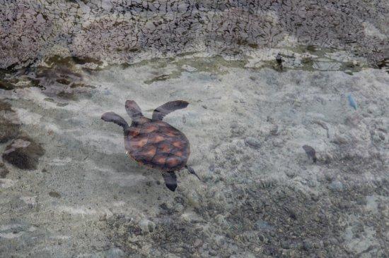 Turtle Conservation Center: Tortue en quarantaine 3