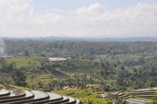 Jatiluwih Green Land: Great...