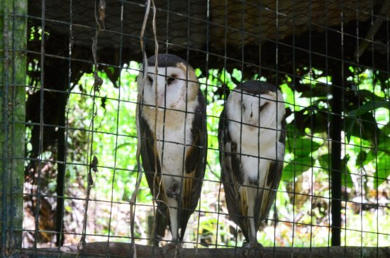 Davao City, Filipinas: There are owls too.
