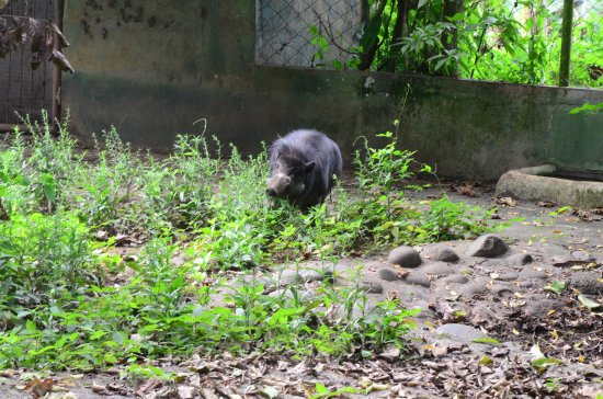 """Davao City, Filipinas: Also what is described as a """"warty pig."""""""