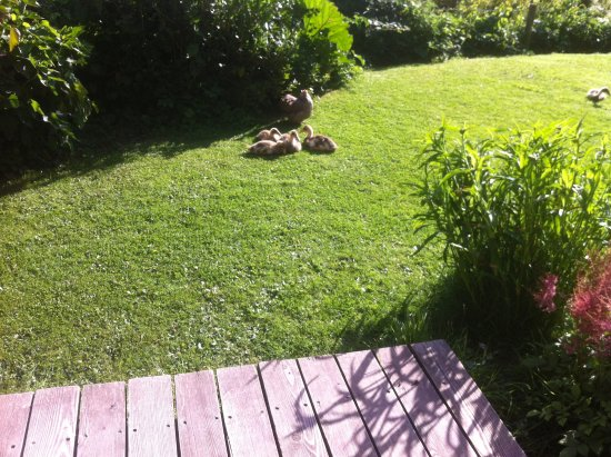 Dorstone, UK: View from bedroom across wooden patio onto lawn showing ducklings.