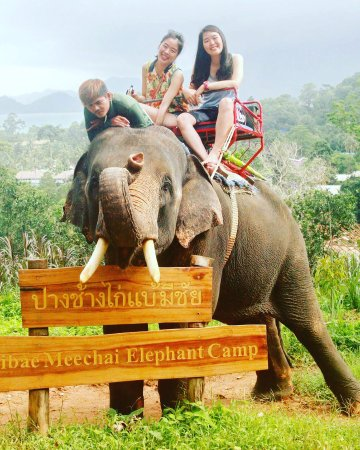 Ban Chang Thai - Elephant Camp: Very great experience!