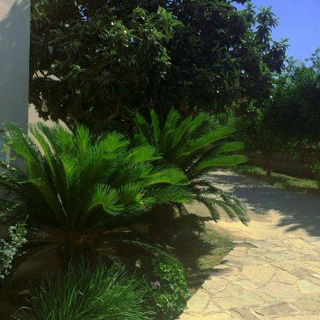 Millenium Studios: Garden
