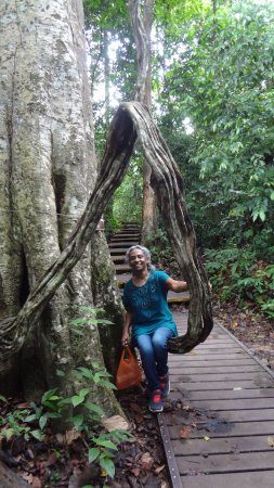 Taman Negara National Park, Malaysia: Large ancient rope like Creepers