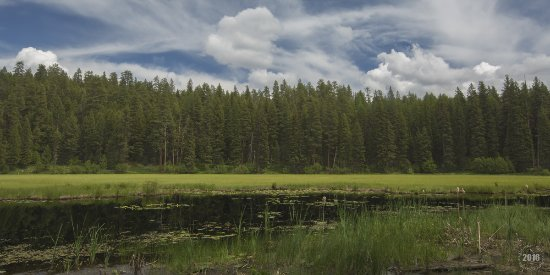 Ponderosa State Park: Ponderosa Pine State Park 2016 (By Louis Ruth Photography)