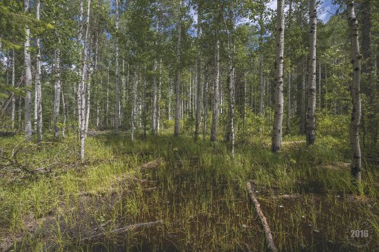 Ponderosa State Park: In the thicket of it all (By Louis Ruth Photography)