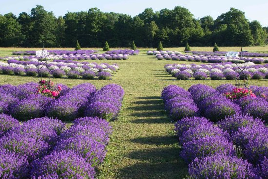 ‪Fragrant Isle Lavender Farm & Shop‬