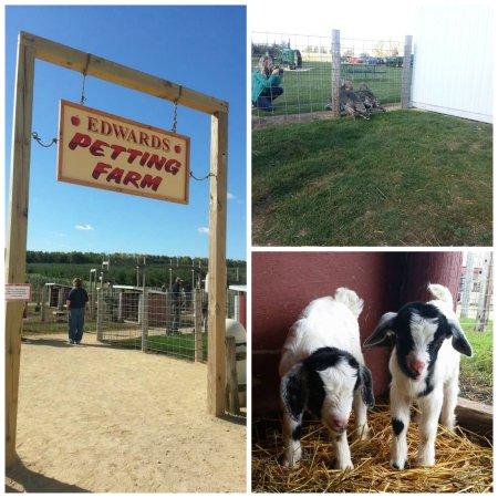 Winnebago, IL : Petting Farm
