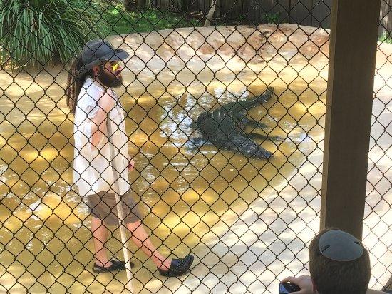 Weston, FL: Alligator