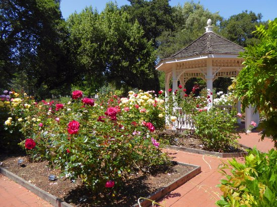 San Mateo, CA: The Rose Garden within Central Park