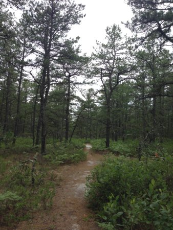 Mullica River Wilderness Camp: hike