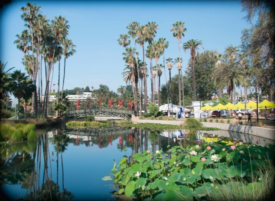 Echo Park : Keep on walking around the lake, there is a larger lotus field!