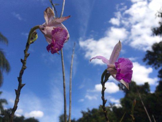 Resultado de imagem para flores no caminho