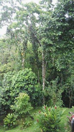 Cashew Hill Jungle Cottages : IMG-20160704-WA0020_large.jpg