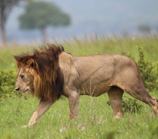 Chabo Africa Safaris