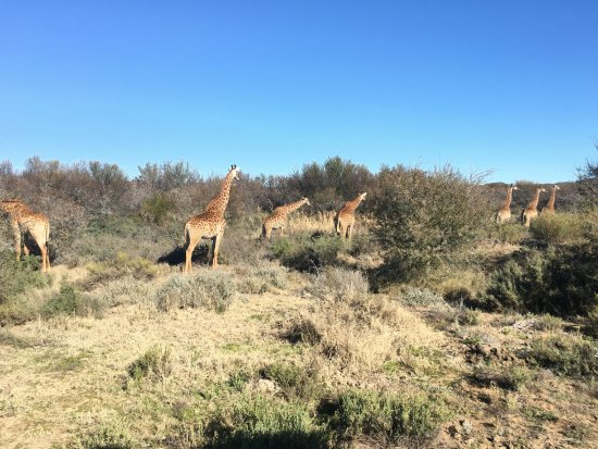 Sanbona Wildlife Reserve - Tilney Manor, Dwyka Tented Lodge, Gondwana Lodge Photo