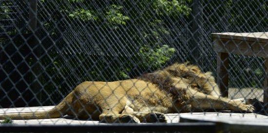 Bemidji zoo
