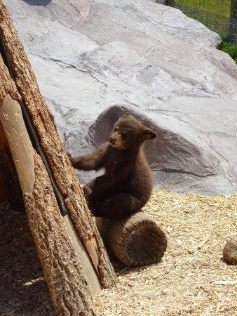 Rexburg, ID: Yellowstone Bear World