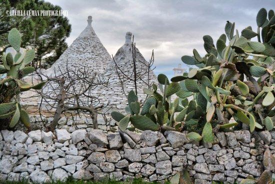 Valle d'Itria: Valle d Itria in inverno
