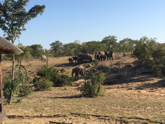 Shindzela Tented Safari Camp: photo2.jpg