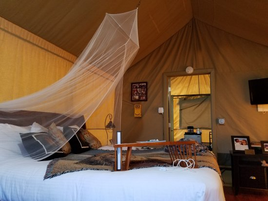 Vision Quest Safari Bed U0026 Breakfast Photo