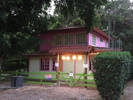Casa Ficus Tree