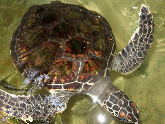 Sea Turtle Farm and Hatchery
