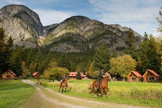 Stuie, Canadá: Our Icelandic Horses