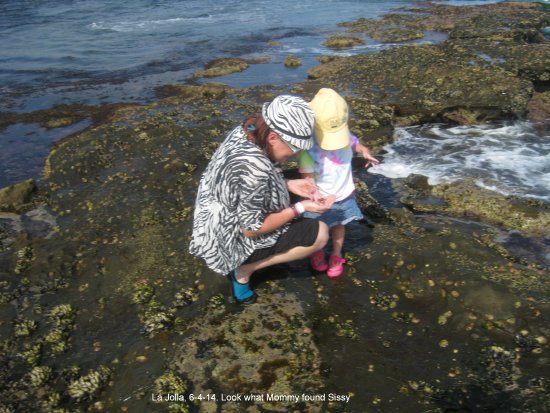 Shell Beach Tide Pools: an older picture of tide pooling at Shell Beach