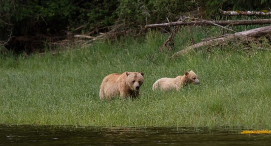 Telegraph Cove, Kanada: Mon and 1 year old cub