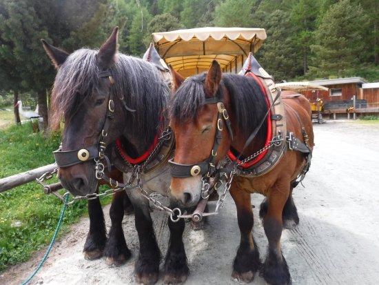 Hotel Roseg Gletscher: Great mode of transportation to hotel & restaurant