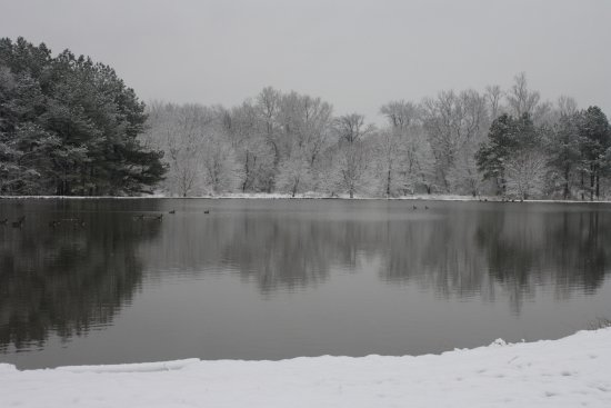 Elkton, MD: Even looks good in the snow