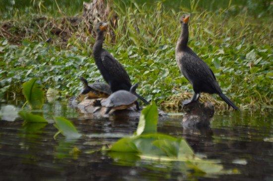 เดอแลนด์, ฟลอริด้า: Wildlife is amazing