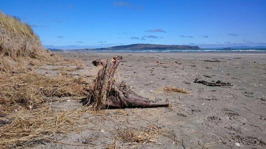 Инверкаргилль, Новая Зеландия: Omaui Peninsula from Oreti Beach, July 2016