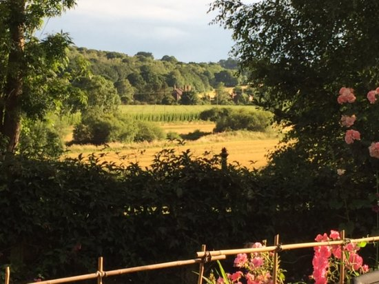 Robertsbridge, UK: Hop fields in the distance