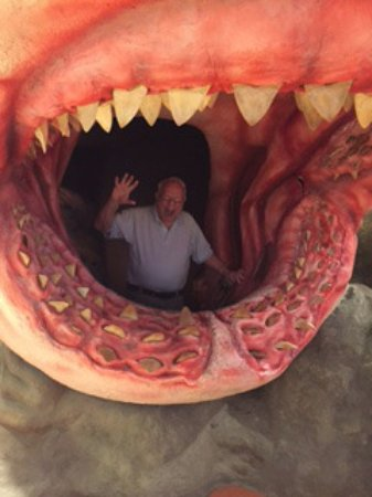 "Inside a ""shark's mouth"" - Picture of Museum of Discovery and Science, Fort Lauderdale - TripAdvisor"