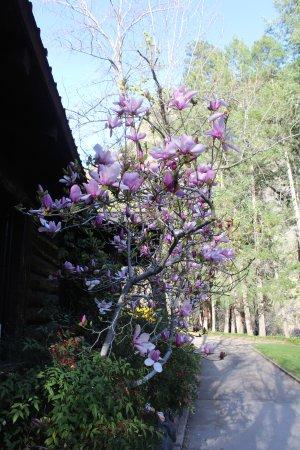 Garlands Oak Creek Lodge: Flowers everywhere in the spring.
